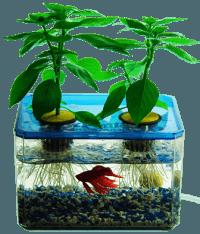 מגדלים צמחים ומקשטים את הבית עם דגי נוי