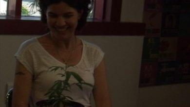 """""""זה הקטן גדול יהיה"""" חברת הכנסת תמר זנדברג עם צמח הקנאביס"""