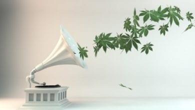 קנאביס מוזיקה
