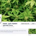 המשביר לגנן - דף פייסבוק מגדל מריחואנה