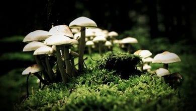 Photo of טריפ ריפורט: איך להשתמש בפטריות קסם