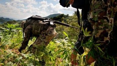 שדות מריחואנה במקסיקו
