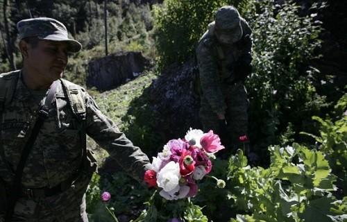 סוחרי סמים מריחואנה מקסיקו ארצות הברית