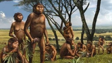 Cannabis in the prehistoric period
