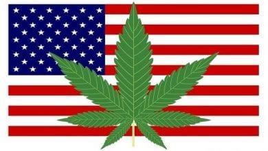 """Photo of כוכבים ירוקים בדגל – מדינות ארה""""ב עוברות לירוק"""