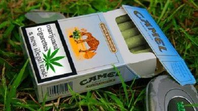 Photo of הארכיון הסודי נחשף: כך תכננו חברות הטבק להשתלט על תעשיית הקנאביס