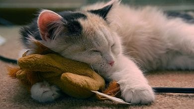 Photo of חלומות פז: 5 דרכים בהן עוזר הקנאביס לשינה מתוקה