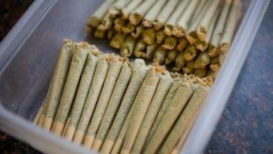 כמה מריחואנה מעשנים בקולורדו