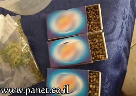 אלפי זרעים נצרת עילית