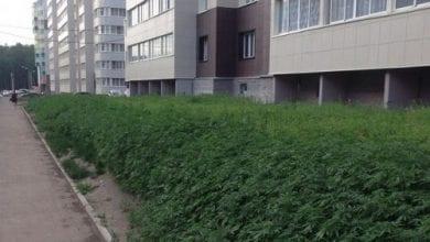 Photo of טעות בזרעים: פועלים שתלו גראס במקום דשא