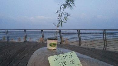 """Photo of """"דווקא עכשיו"""": עציצי קנאביס פוזרו ברחבי תל אביב"""