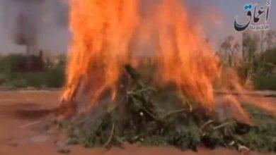 דעאש מריחואנה שריפה