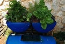 Plantas sanas y saludables con un esfuerzo mínimo