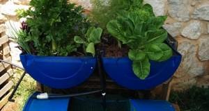 צמחים ירוקים ובריאים במינימום מאמץ