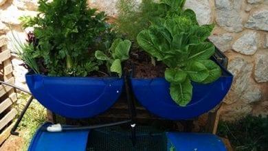 Photo of אקוופוניקה: גידול צמחים אוטומטי על בסיס מים ודגים