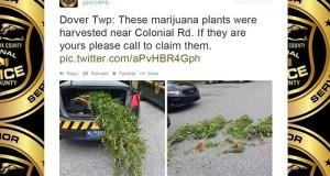 משטרה מלכודת מריחואנה