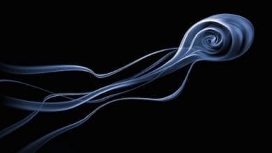 Photo of אמן צילם 100,000 תמונות של עשן – ואלו הטובות שבהן
