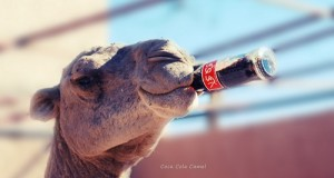 גמל קוקה קולה