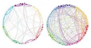 רשתות תקשורת במוח תחת השפעת פסילוסיבין