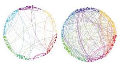 Photo of מחקר: כך משפיעות פטריות קסם על המוח