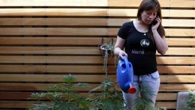 Photo of תופעה בצ'ילה: אמהות מגדלות מריחואנה