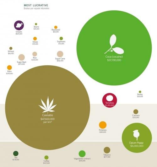 היבול השווה ביותר לגידול