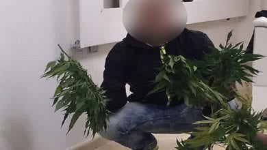 Photo of משטרת הפייסבוק: העלה תמונה עם שתילי קנאביס – ונעצר