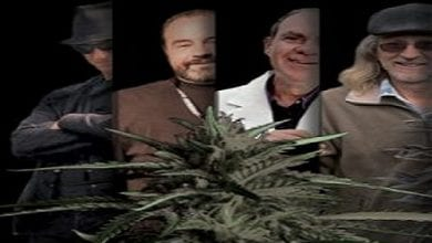 אגדת דשא: ארבעה מובילי דעה בתעשיית גידול הקנאביס