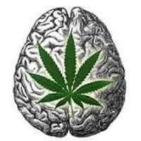קנאביס - לא גורם נזק ושינויים במוח