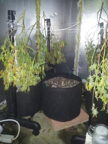 חלק מהצמחים תלויים לייבוש