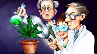 Photo of אין מספיק מחקרים? – קנאביס נבדק יותר מתרופות מאושרות