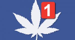 FBWEED