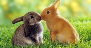 """ב-DEA מזהירים: """"ארנבים בסכנת התמסטלות"""""""
