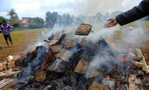 שריפת סמים אינדונזיה
