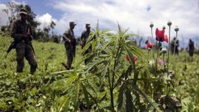 5 דרכים בהן מדינות העולם השלישי נפגעות מהמלחמה בסמים