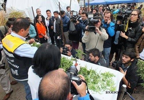 התעניינות אדירה של התקשורת בצ'ילה למיזם הקנאביס הרפואי