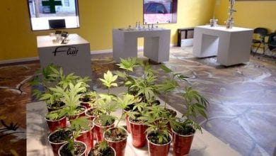 Photo of הרשות האמריקנית למלחמה בסמים מודה: קנאביס הורג סרטן