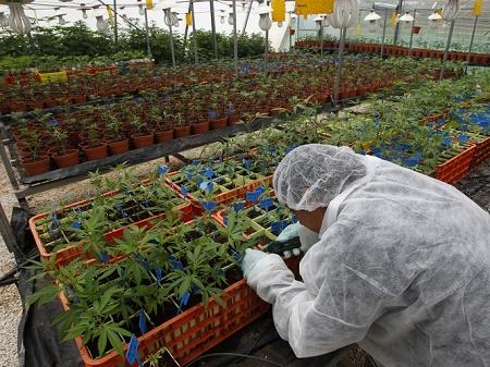 Israël - une puissance de cannabis médical dans le monde