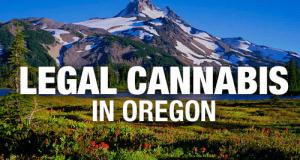 קנאביס חוקי באורגון