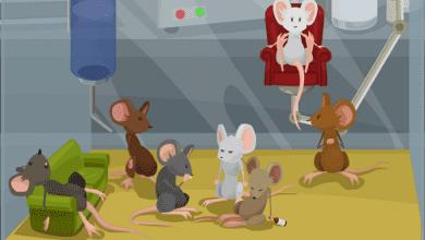Photo of איך פארק שעשועים לעכברים שינה את כל מה שידענו על התמכרות