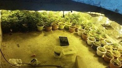 Photo of תל שבע: נחשפה מנהרה סודית לגידול מריחואנה – בבור ביוב