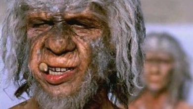 Photo of מחקר מצא: קנאביס הגן על האדם הקדמון מפני טפילים