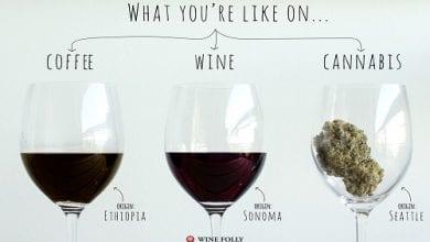 Photo of סדרת איורים: המוח שלכם על קנאביס, יין וקפה