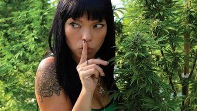 צעד אחד קדימה: כך תרחיקו שוטרים (וגנבים) מהגינה שלכם
