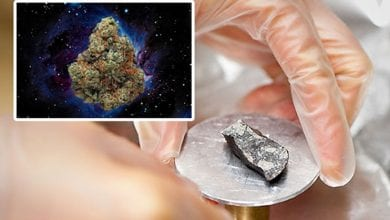 Photo of לא, עדיין לא נמצאה מריחואנה בחלל