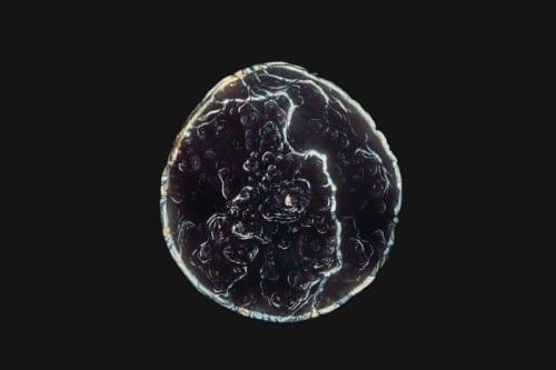 סיפורי מיקרוגרף - סמים תחת מיקרוסקופ
