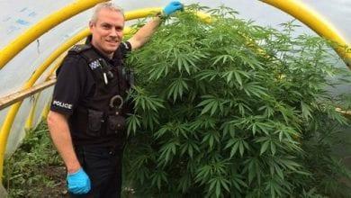 "Photo of שוטרים באנגליה: ""תגדלו קנאביס – לא נעצור אתכם"""