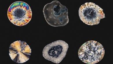 Photo of מרהיב: כך נראים סמים תחת המיקרוסקופ