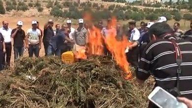 משטרת חברון שרפה 3 טון מריחואנה