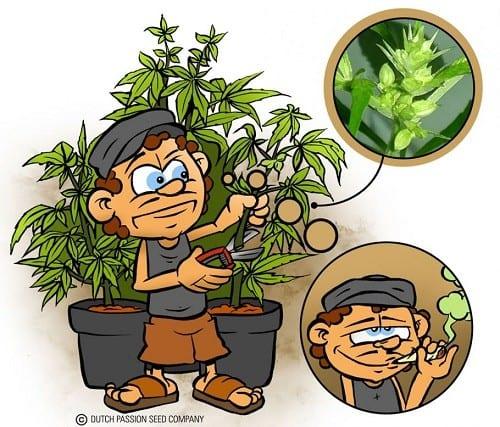 לאט ובזהירות: מסירים מהצמח בולבול בולבול